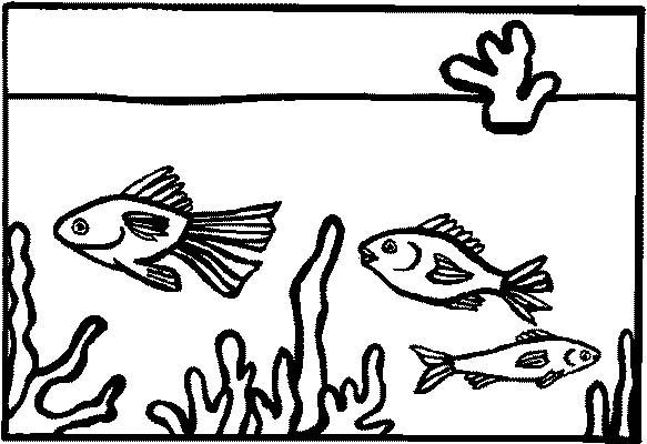Acquari pesciolini 2 disegni per bambini da colorare for Pesciolini da colorare per bambini