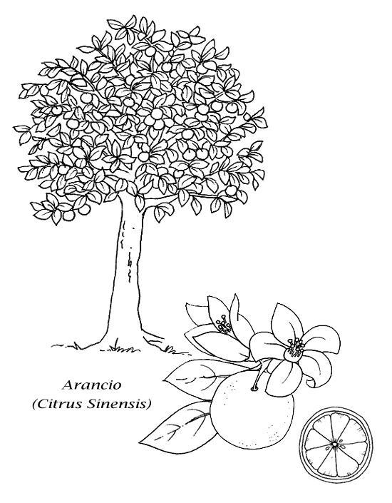 Alberi 4 disegni per bambini da colorare - Immagini da colorare della natura ...