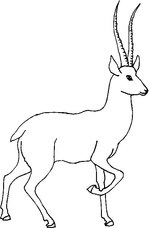 animale con corna 2  disegni per bambini da colorare