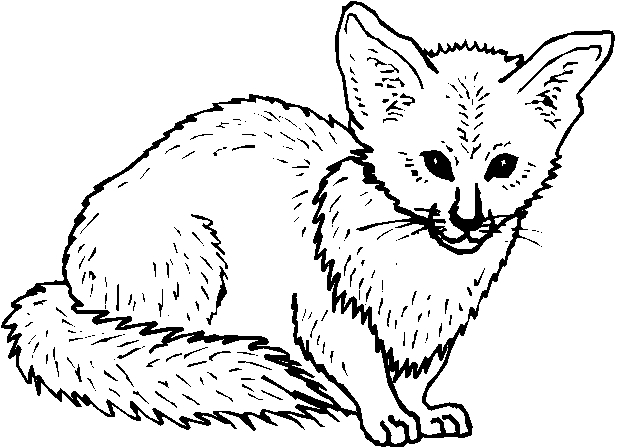Animali foresta 19 disegni per bambini da colorare - Immagini da colorare della natura ...