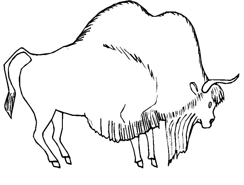 Animali foresta 25 disegni per bambini da colorare for Disegni da colorare animali della foresta