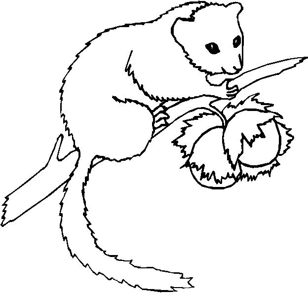 Animali foresta 29 disegni per bambini da colorare for Disegni da colorare animali della foresta