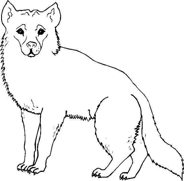 Animali foresta 7 disegni per bambini da colorare - Stampare pagine da colorare ...