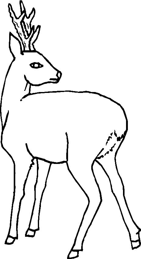 Animali foresta 19 disegni per bambini da colorare - Elfo immagini da stampare gratuitamente ...