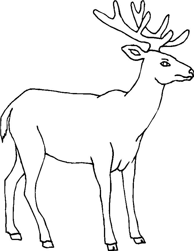 Disegni animali della foresta 17 disegni per bambini da for Disegni da colorare animali della foresta