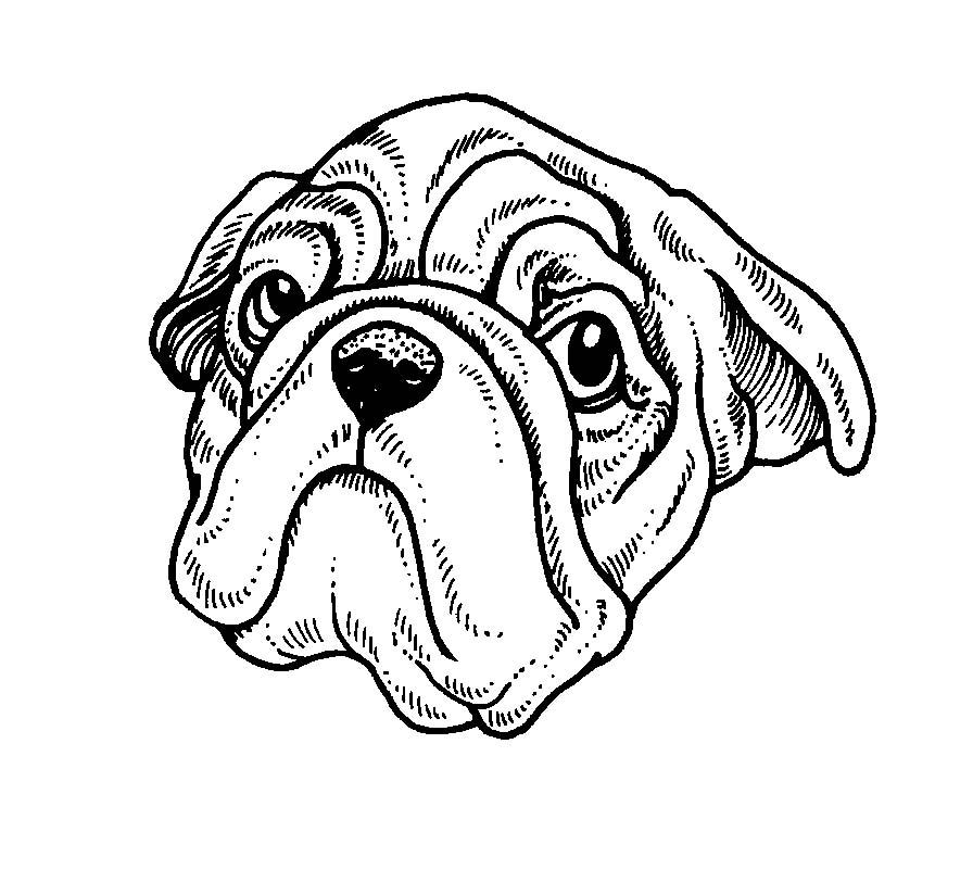 Cani 3 disegni per bambini da colorare for Disegni da stampare e colorare di cani