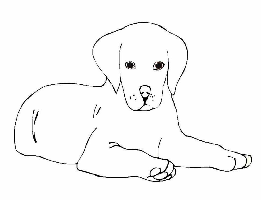 Cani 5 disegni per bambini da colorare for Disegni di cani da stampare e colorare