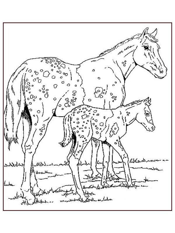 Cavalli 18 disegni per bambini da colorare for Cavalli da colorare per bambini