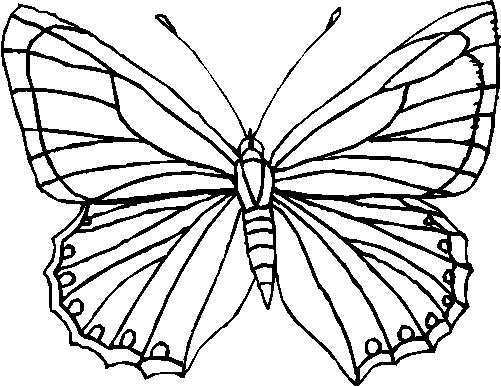 disegni da colorare e stampare sulle farfalle