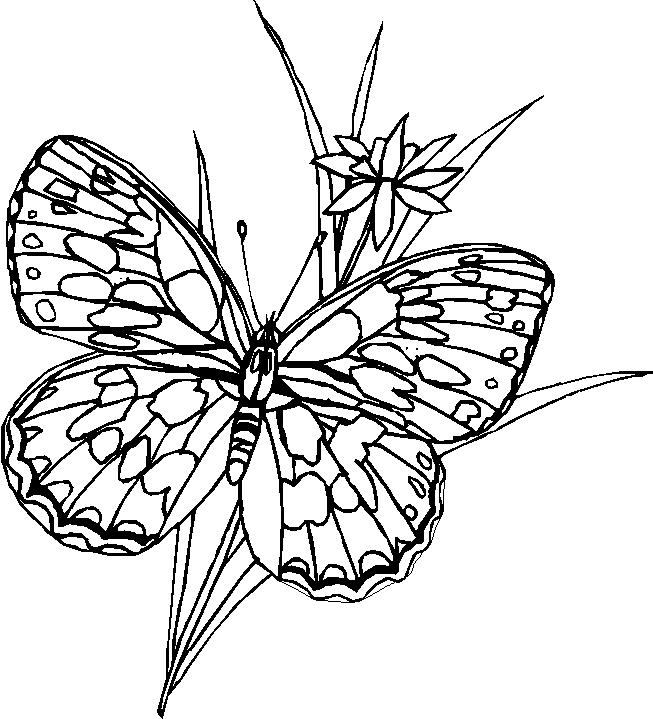 Farfalle 10, Disegni Per Bambini Da Colorare