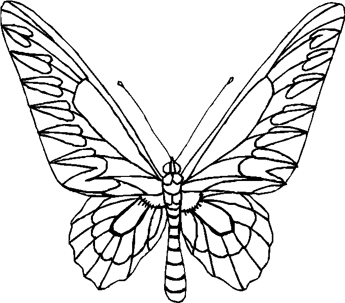 farfalle 12 disegni per bambini da colorare