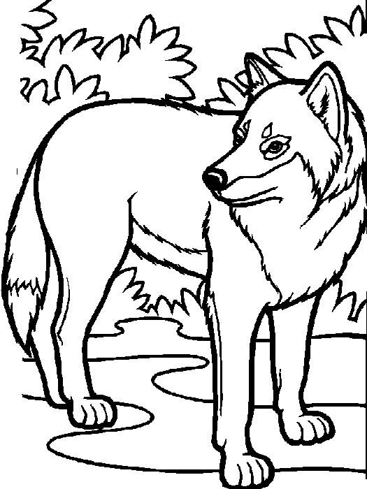 lupi disegni per bambini da colorare