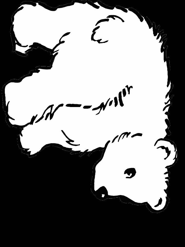 Orsi 3 disegni per bambini da colorare - Orsi polari pagine da colorare ...