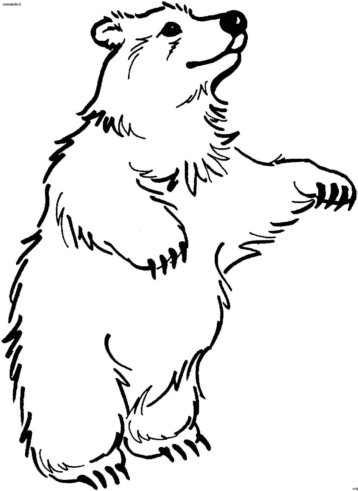 Orsi 17 disegni per bambini da colorare - Orsi polari pagine da colorare ...