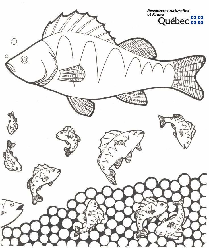 Pesci 3 disegni per bambini da colorare for Pesci da stampare e colorare