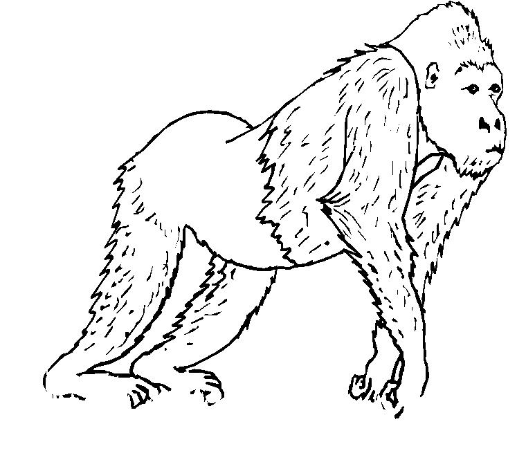 scimmie 5  disegni per bambini da colorare