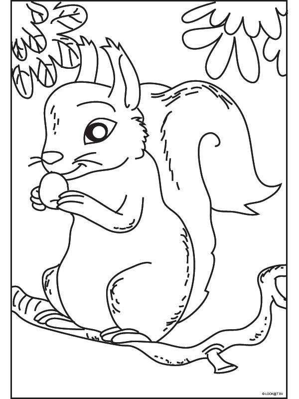 Scoiattolo 2 disegni per bambini da colorare for Foto per bambini da colorare