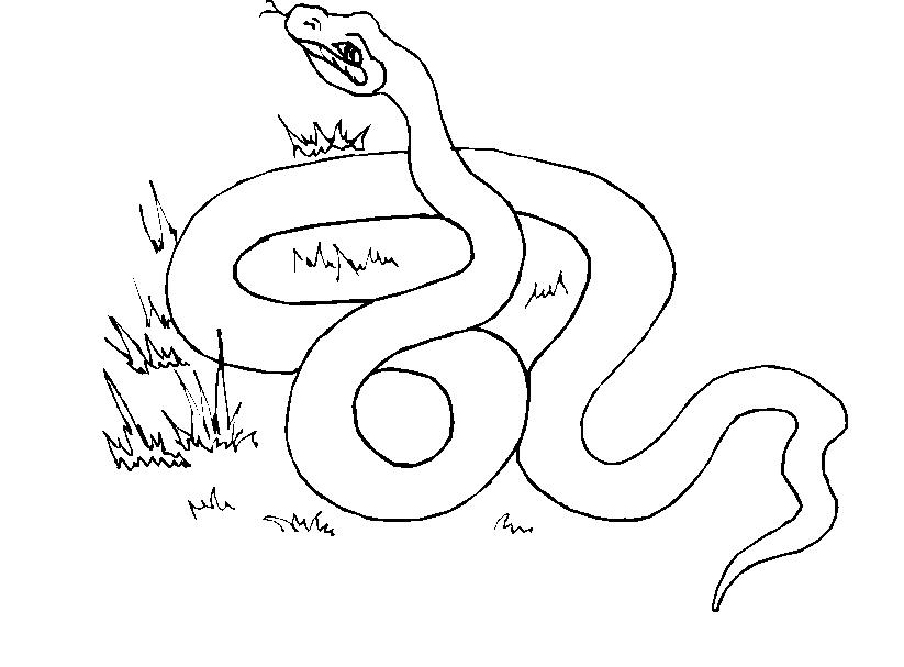 Serpenti 5 disegni per bambini da colorare for Cip e ciop immagini da colorare